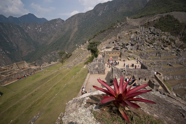 Peru Machu Picchu Flower Foreground-Leo Tamburri 2010-IGP7191 Lg RGB